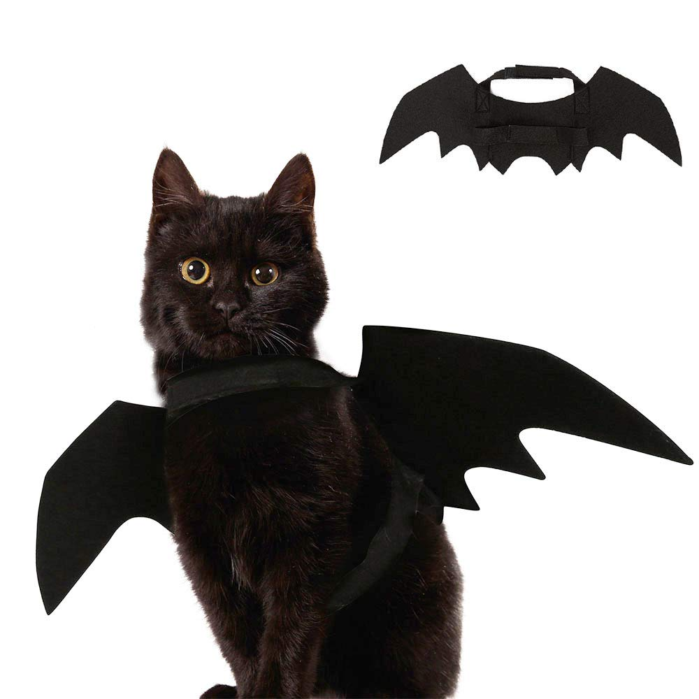 Fun costume for cats