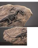 XINDAM Resin Dinosaur Fossil Statue Model Simulated Skeleton Home Office Display Decorative Craft Box Decoration