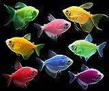 GloFish Tetra Complete Live Aquarium Fish Collection