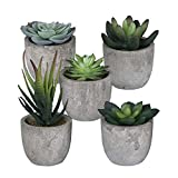 Sophia's Garden Set of 5 Artificial Succulent Plants with Pots - Realistic Greenery Mini Potted Faux Plant Arrangements | for Home Office Decor, Dorm Room, Bathroom, Kitchen Table Centerpieces