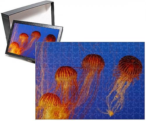 photo-jigsaw-puzzle-of-wat-16352-japanese-pacific-sea-nettle-jellyfish