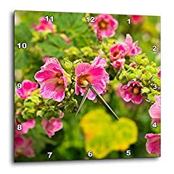 3dRose Alexis Photography - Flowers Malva Mallow - Arch of Beautiful Pink Malva, Mallow, malvaceae Flowers Summer Joy - 10x10 Wall Clock (DPP_319939_1)