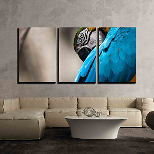"wall26 - 3 Piece Canvas Wall Art - Blue and Yellow Macaw Perched on a Tree Branch - Modern Home Decor Stretched and Framed Ready to Hang - 16""x24""x3 Panels"