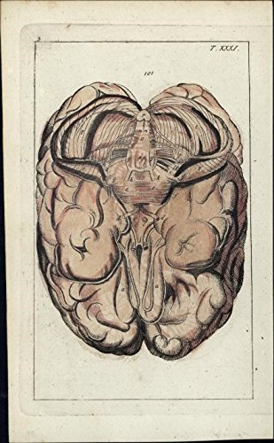 Amazon Brain Cross Section Anatomy 1813 Rare Hand Color Print