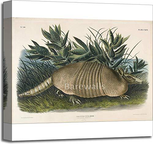 ココノオビアルマジロ( Dasypus Peba ) by John Woodhouse Audubon用紙印刷壁アートギャラリーWrappedキャンバスアート 20in. x 20in. B079GRFD3Q  20in. x 20in.