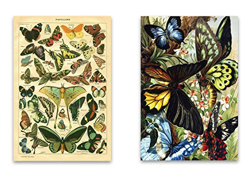 "[Vintage Natural Curiousities Butterfly Fridge Magnet Set - 2""x3"" featuring Old Illustrations of Insects for Kitchen Art, Office Decor, Gardener Gift for Adults, Kids, Men & Women - Made in] (Toddler Gardener Costume)"