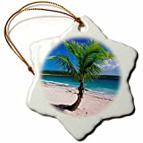 3dRose Danita Delimont - Beaches - Caribbean, Puerto Rico, Vieques. Lone coconut palm on Red Beach. - 3 inch Snowflake Porcelain Ornament (orn_277165_1)