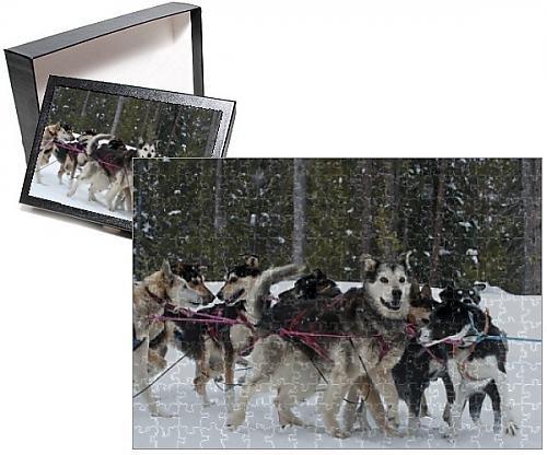 Sled Dog Team (Photo Jigsaw Puzzle of Dog sledding team during snowfall, Continental Divide, near Dubois, Wyoming)