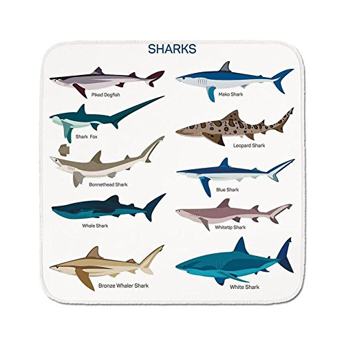 - Cozy Seat Protector Pads Cushion Area Rug,Sea Animal Decor,Collection Types of Sharks Bronze Whaler and Piked Dogfish Fox Maritime Design,Multi,Easy to Use on Any Surface