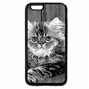 iPhone 6S Case, iPhone 6 Case (Black & White) - Maine Coon by some flowers