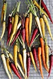 Rainbow Carrot Mix - 500 Seeds - Red, Orange, Yellow, White, and Purple Carrots by RDR Seeds