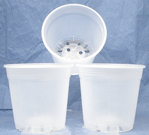 8 diameter plastic orchid pots - 9