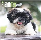 Shih Tzu Puppies 2015 Square 12x12 (Multilingual Edition)