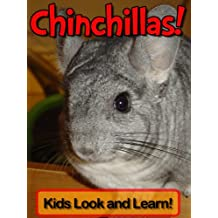 Chinchillas! Learn About Chinchillas and Enjoy Colorful Pictures - Look and Learn! (50+ Photos of Chinchillas)
