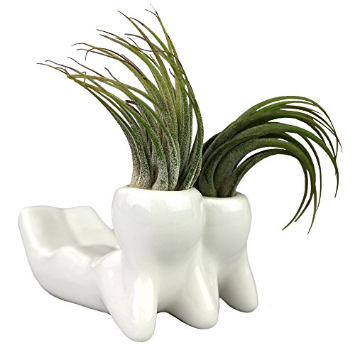 NW Wholesaler - Air Plant Little People Air Plant Holders -Laying Down Ceramic Desktop Planters for Air Plants and Other Mini Plants