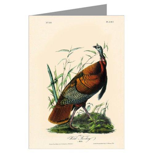 Original Audubon Artwork - 6