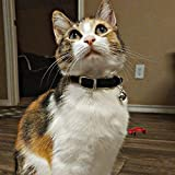 KOOLTAIL Heart Bling Cat Collar with Safety Belt
