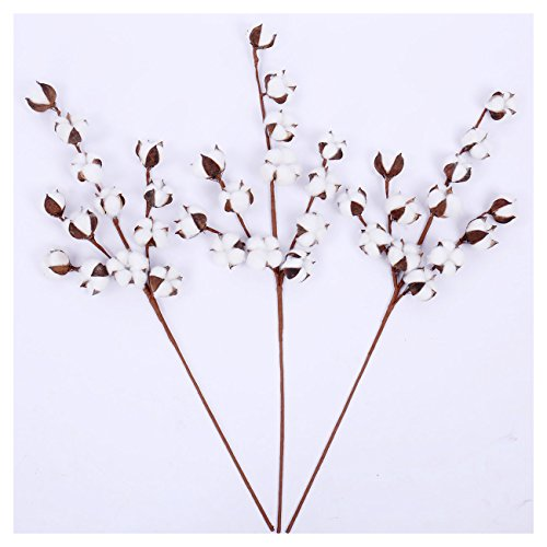 """WMAOT Cotton Stems - 30"""" Tall - 13 Bolls/Stem Farmhouse Style Real Elastic Cotton Stalk Rustic Floral for Home Decor Wedding Centerpiece (Pack of 3)"""