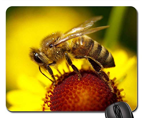(Mouse Pad - Bee Flower Insect Blossom Bloom Macro Nature 2)