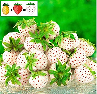 Caiuet Seed house - 50 Organic Strawberry Plant Pineapple-Strawberry Pineberry, Sugar-Sweet Fruit Seeds Rarities Large-fruited Strawberry Climbing Plants Hardy Perennial for Balcony and Garden