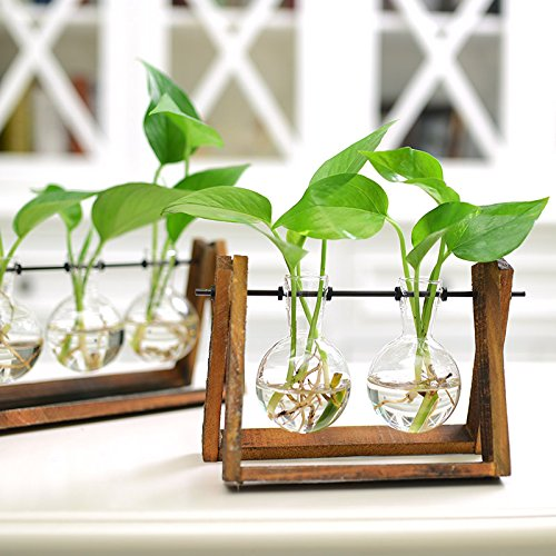 Cibeat Creative Plant Glass Hydroponic Container Terrarium Desk Decor with Wood Stand Flower Pot Home Decoration