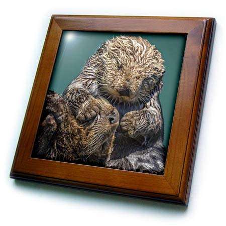 3dRose Danita Delimont - Otters - USA, California, Morro Bay State Park. Sea Otter Mother with pup. - 8x8 Framed Tile (ft_314662_1) ()