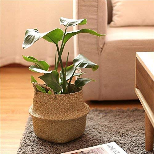 (Jason's Brothers Foldable Seagrass Belly Basket with Handles for Storage, Nursery Laundry Tote Beach Bag Plant Pots Cover Indoor Decorative 11
