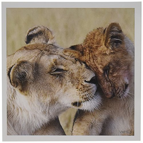 3dRose Female African Lion muzzles her cub.(Panthera leo).Serengeti National Park, Tanzania - Greeting Cards, 6 x 6 inches, set of 12 (African Lion Panthera Leo)