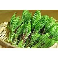 国産 天然 山菜 コシアブラ(こしあぶら)200g 奥会津旬彩館