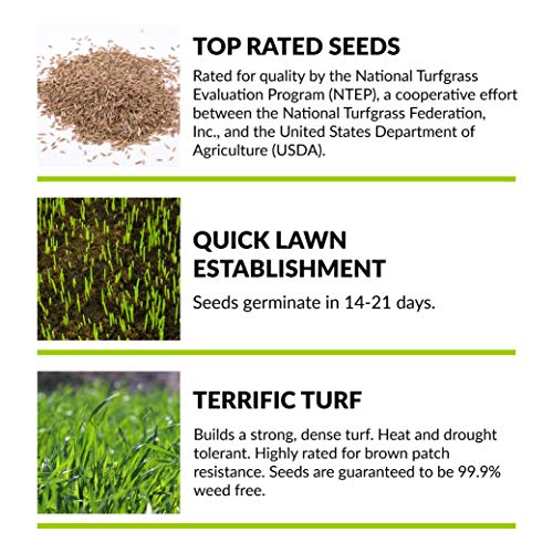 GreenView Fairway Formula Grass Seed Turf Type Tall Fescue Sun & Shade Blend, 10 lb Bag by Greenview (Image #2)