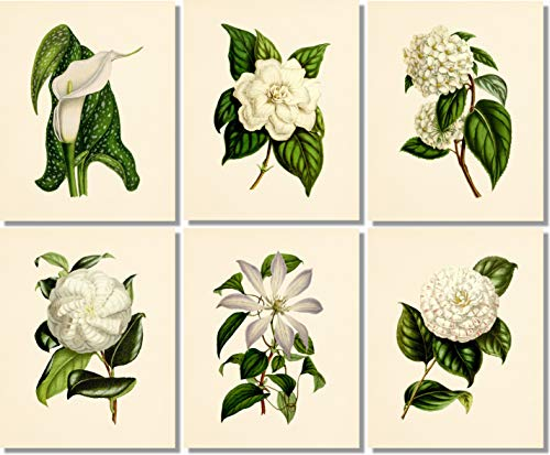 Flower Wall Art - Vintage Floral Decor (Set of 6) - 8x10 - Unframed - Botanical Prints - White