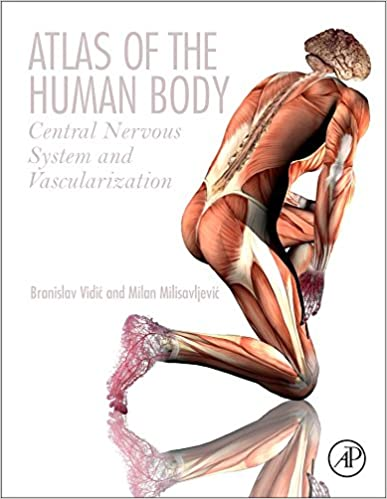 Atlas Of The Human Body Central Nervous System And Vascularization