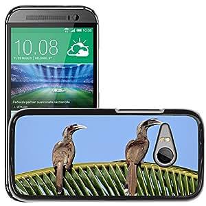 Super Stella Slim PC Hard Case Cover Skin Armor Shell Protection // M00146861 Indian Grey Hornbill Ocyceros Birostris // HTC One Mini 2 / M8 MINI / (Not Fits M8)