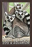 Ring Tailed Lemurs - Point Defiance Zoo and Aquarium (16x24 Giclee Art Print, Gallery Framed, Espresso Wood) offers
