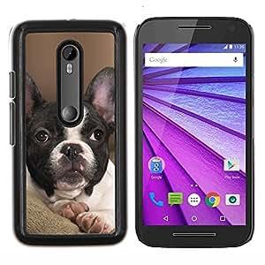 YiPhone /// Prima de resorte delgada de la cubierta del caso de Shell Armor - Bulldog francés Boston Bull Terrier mascotas - Motorola MOTO G3 / Moto G (3nd Generation)