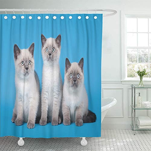 "Emvency Decorative Shower Curtain Silver Cat Small Blue Color Point British Kitten on Light Animal Beautiful Eyes 72""x78"" Waterproof Bathroom Shower Curtain Set with Hooks"