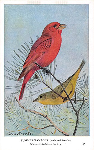 Summer Tanager 1939 Audubon Summer Birds of Eastern North America #29 (VG+)