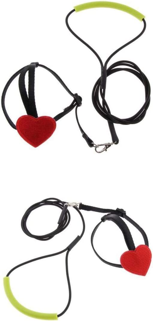Fenteer Ajustable Parrot Bird Harness Leash Anti-Bite Training Cuerda Outdoor 2 Pack: Amazon.es: Productos para mascotas