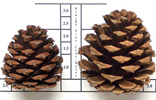 Pine Cone Hanging - 7