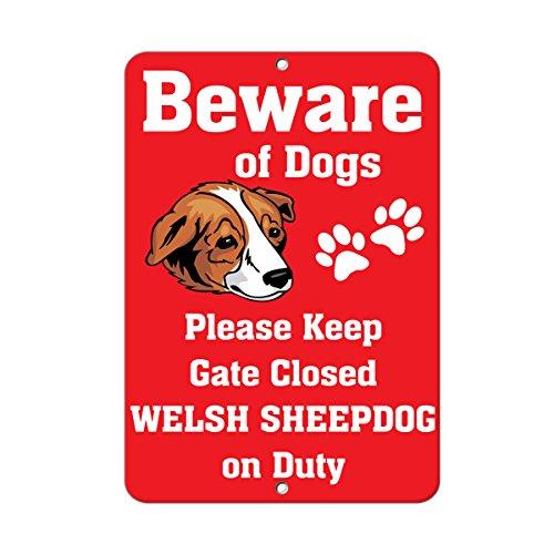 Welsh Sheep - 2