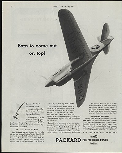 Born to come out on top! Curtiss P-40F Warhawk Packard for sale  Delivered anywhere in USA