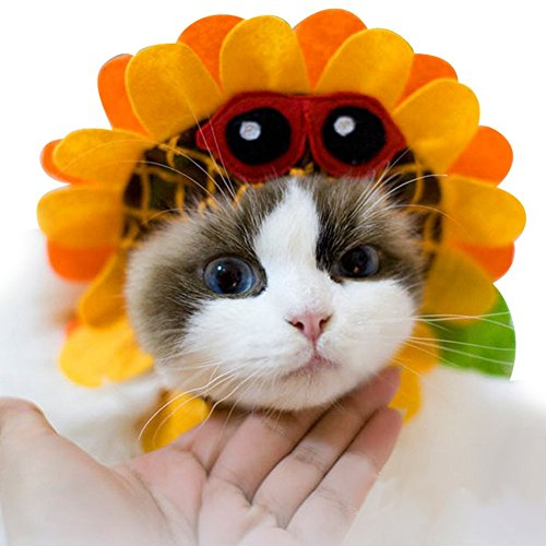 Sunflower Cat Costume (NACOCO Pet Funny Sunflower Hat Dog Puppy Cat Headwear Pet Party Costume Orange (Medium))