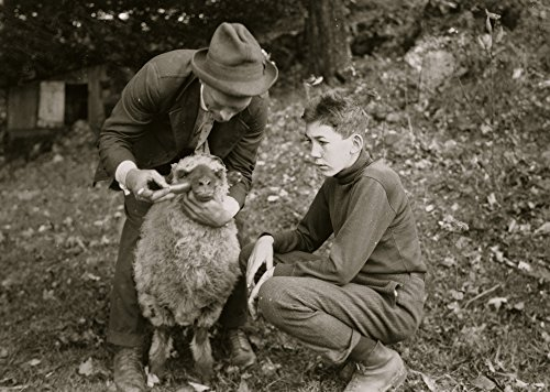 Forest Kellison 4 H Club member treating his sheep for internal parasites under direction of Harold Willey Farm Bureau Agent 250 of these club boys and girls in the county Poster Print (24 x 36)