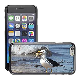 Hot Style Cell Phone PC Hard Case Cover // M00116749 Sea Birds Albatross Crab Food Lunch // Apple iPhone 6 4.7""