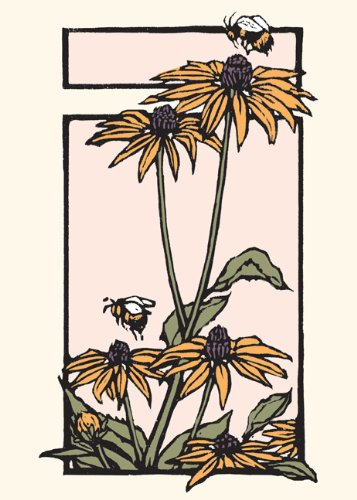 Black-eyed Susan: Boxed Set of 6 Cards