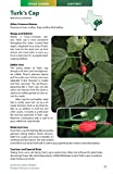 Wild Edible Plants of Texas: A Pocket Guide to