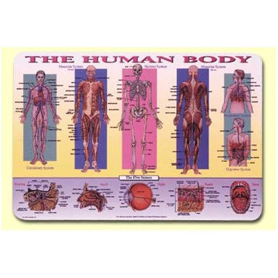 Human Body Placemat [Set of 4]