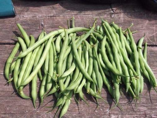 Bush bean Kentucky Wonder 50 seeds (Bush Kentucky Wonder Beans)
