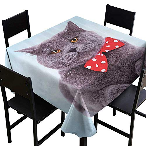 - SKDSArts Table Cover for Dinner KitchenCat Decor,Tuxedo Gray Scottish Fold Theme with Red White Polka Dots Tie Bow Baby Blue Fun,Sky Blue Dimgrey,W60 x L60 Tablecloths for Sale