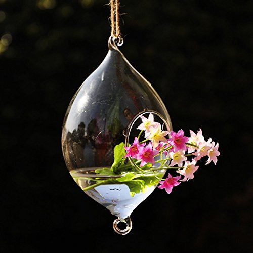 Bluelover Hanging Olive Shape Glass Vase Hydroponic Plants Garden Flower Pot